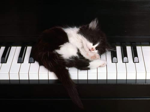 музыка и кошки